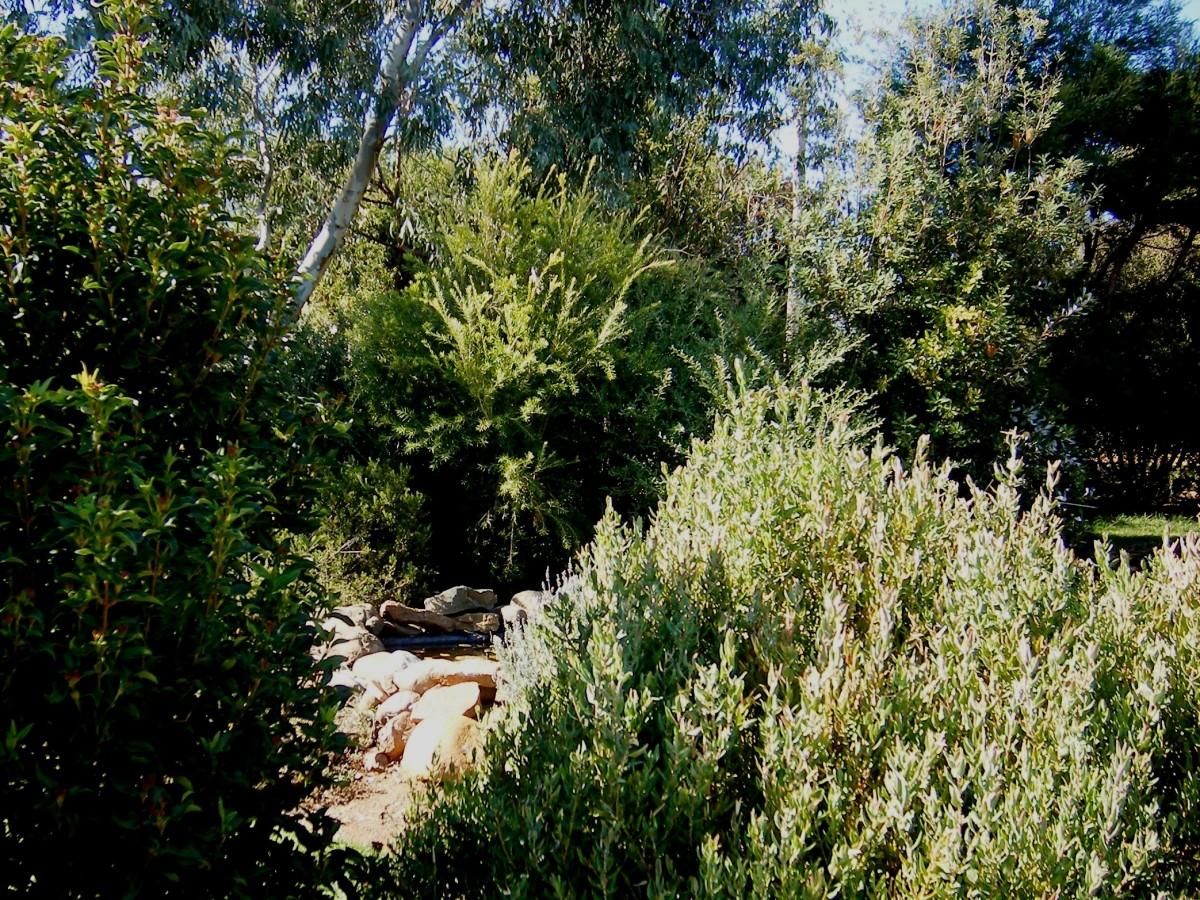 Photo of a garden in Manilla NSW