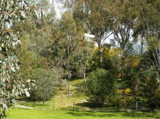 Photo of the garden of local native species