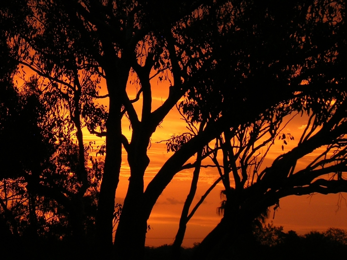 Sun sets through gum tree
