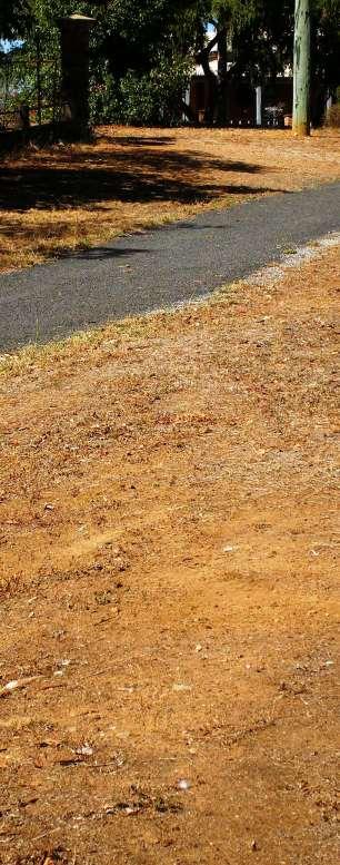 Photo of dead public lawn