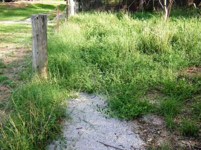 Garden path suddenly overgrown.